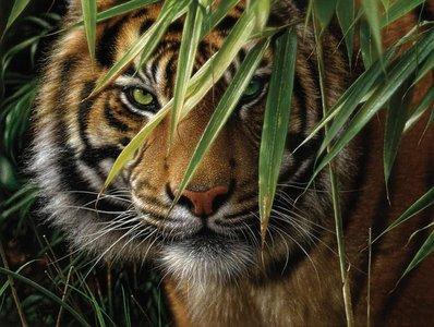 Schilderen op nummer Bengaalse tijger